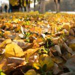 Тепло придёт не только в дом: синоптики рассказали о погоде в Кузбассе на неделю