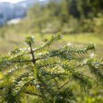 205 тысяч деревьев высадят в Кузбассе в рамках Всероссийских акций «Сохраним лес» и «Лес Победы»