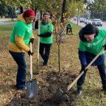 В Кузбассе высадят около 800 тысяч деревьев