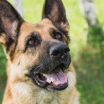 Мэрия Кемерова запретила выгуливать домашних животных во дворах домов