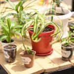 В Кемерове пройдет своп-вечеринка по обмену интересными растениями