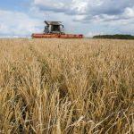 В Кузбассе собрали миллион тонн зерна