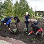 1 200 деревьев высадили в парке «Юбилейный» поселка Бачатский