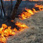 Смелая новокузнечанка тушила пожар мотоциклом