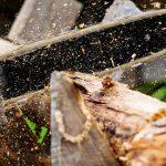 Директора предприятия в Яйском округе будут судить за 23-миллионный ущерб природе