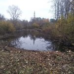 В Новокузнецке энтузиасты планируют очистить пруд и запустить в него амфибию