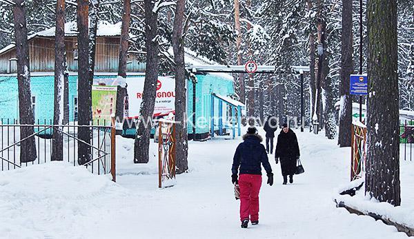 Сосновый бор в Кемерово зимой