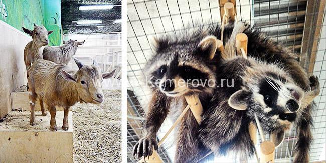 """Контактный зоопарк в Кемерово """"Ребятам о зверятах"""""""