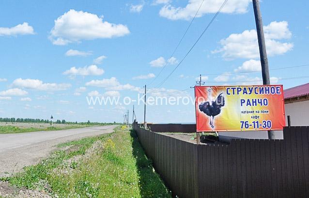 Страусиное ранчо, Кемерово