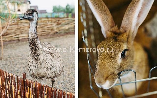"""Страус и кролик в контактном зоопарке """"Вовкин двор"""" города Кемерово"""