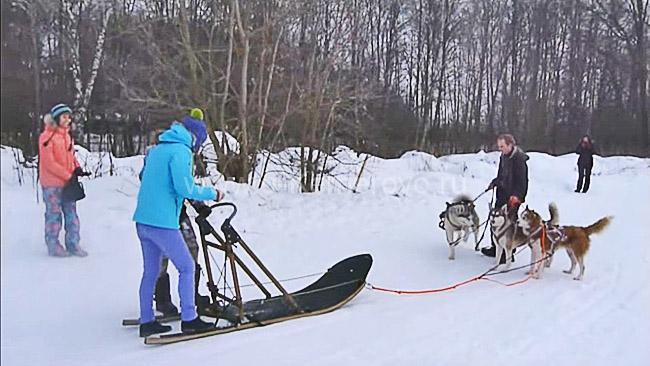 Хаски-лэнд в Кемерово, катание на собачьих упряжках